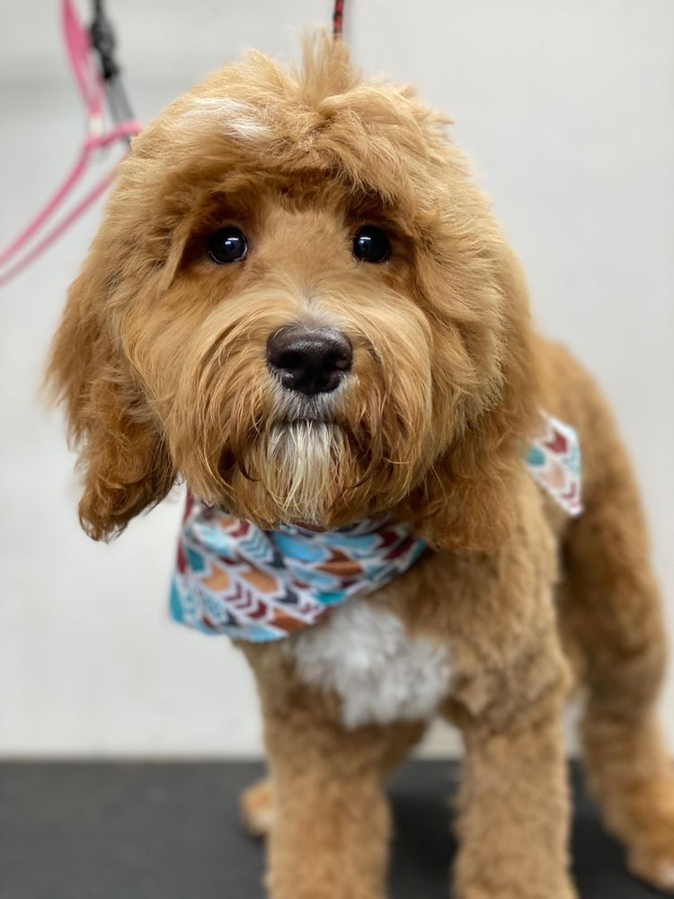 New Image Pet Grooming: Round Rock, TX