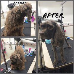 Friend Companion Pet Grooming And Teaching Academy 150 Photos