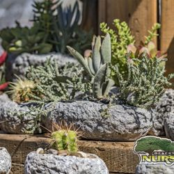Photo Of Desert Horizon Nursery Queen Creek Az United States