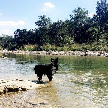 Five Mile Dam Park Dogs