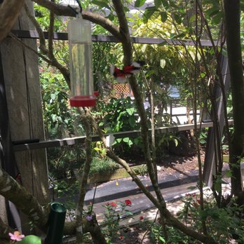 butterfly world coconut creek
