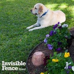 photo of invisible fence brand inland northwest spokane valley wa united states