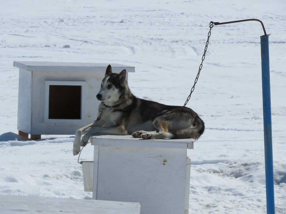 Turning Heads Kennel: 31722 Herman Lierer Rd, Seward, AK