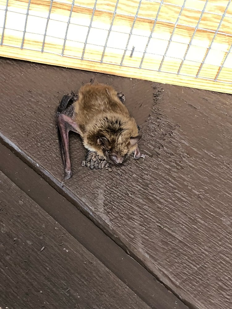 Michigan Bat Control: 2416 Grange Hall Rd, Fenton, MI