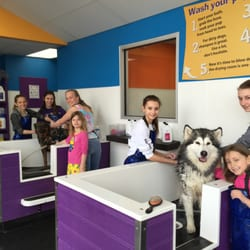 Community bark dog wash groom 33 photos 23 reviews pet photo of community bark dog wash groom bayside wi united states solutioingenieria Gallery