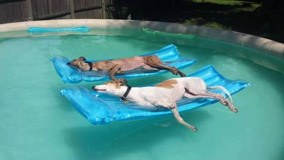 Dog Days of Summer Pool Service: Frederick, MD