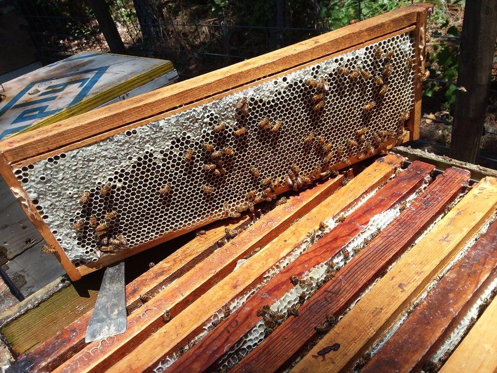 A & M Honeyworks: 3261 Endsley Rd, Brooksville, FL