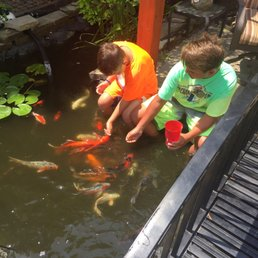Koi island local fish stores lafayette in phone for Koi pool opening times