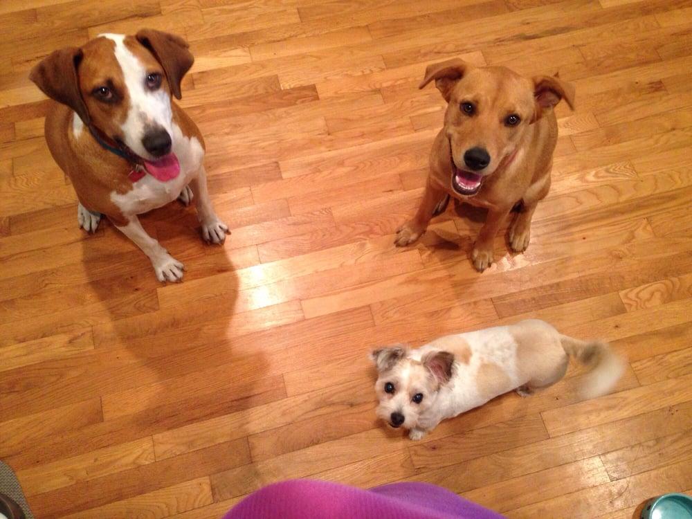 No Place Like Home Mobile Pet Vet: Wilmington, NC