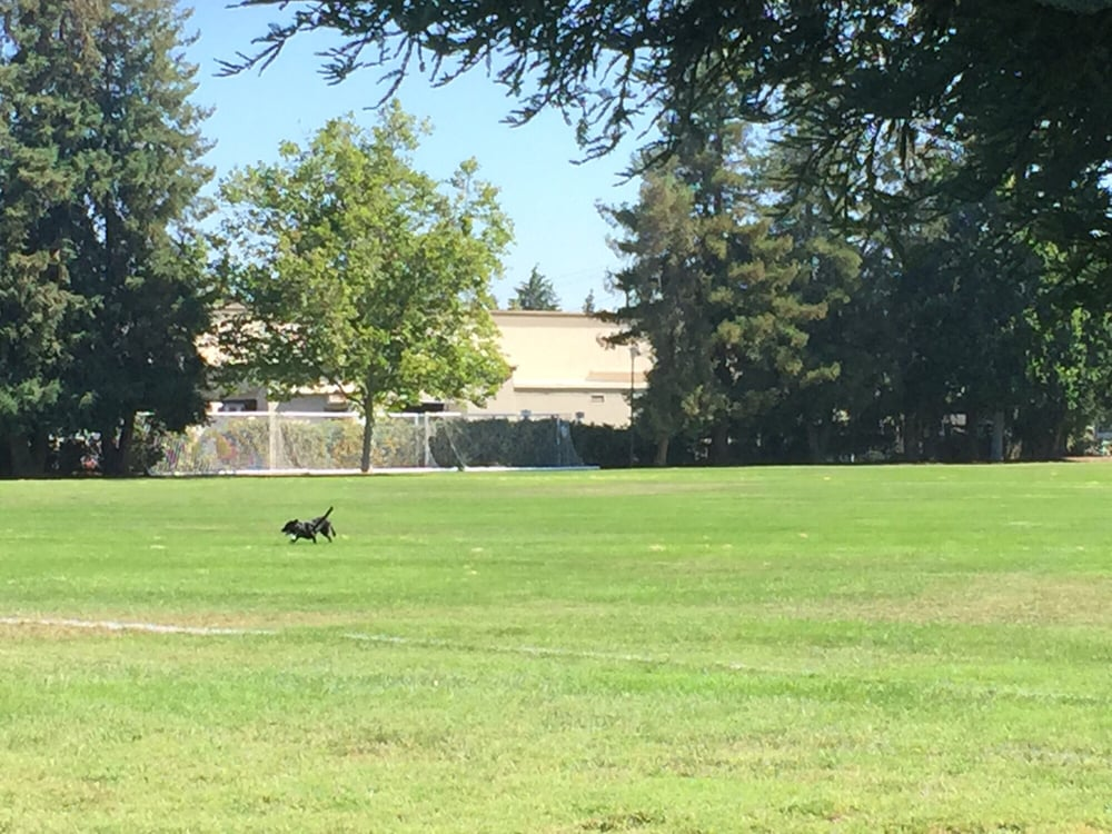 Dog Park Pleasanton Ca