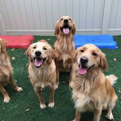 Catch-N-Fetch Daycare for Dogs! - 57 Photos & 12 Reviews