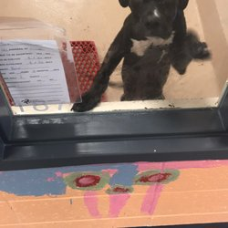 Gwinnett County Animal Shelter - (New) 23 Photos & 17