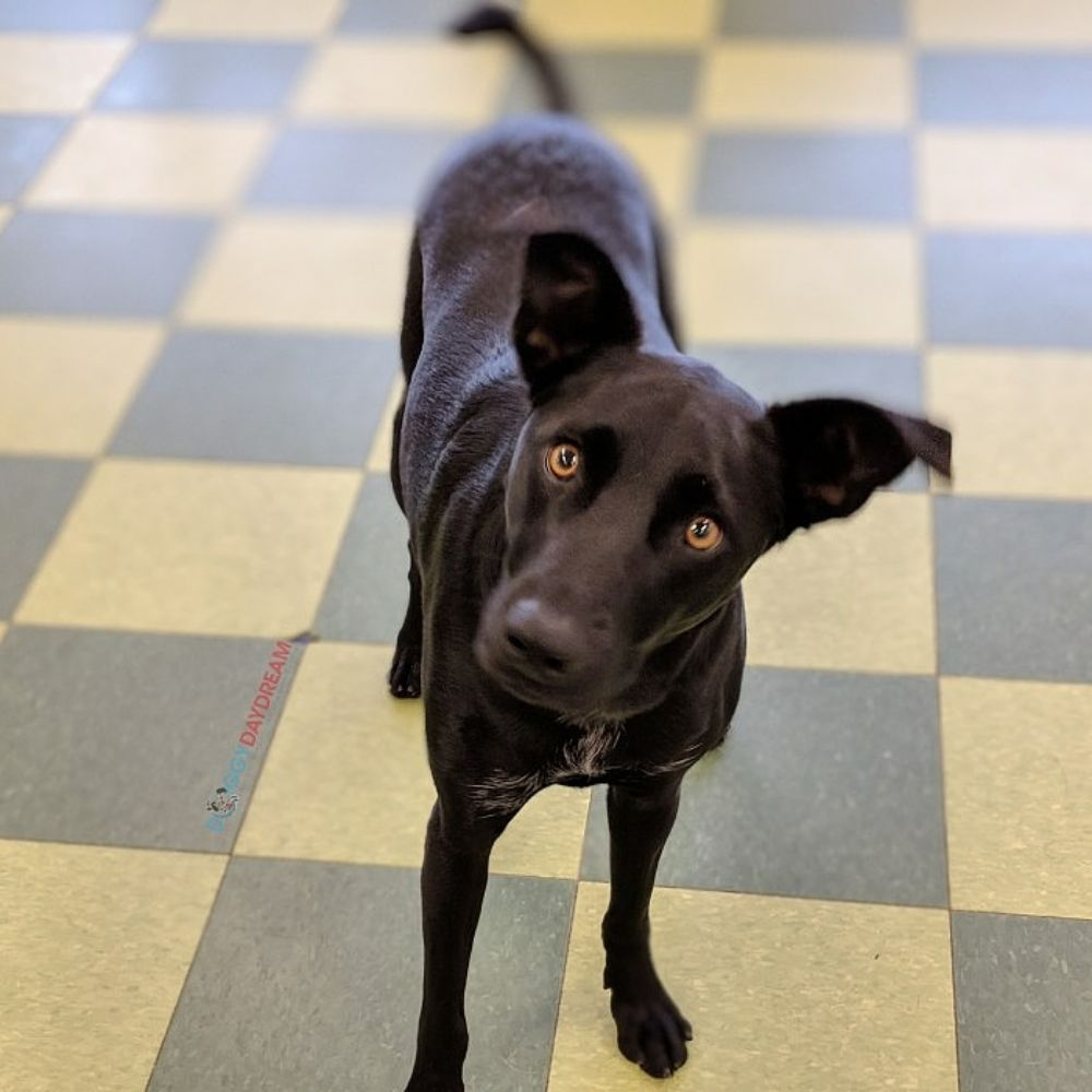 Doggy Daydream: 680 N Milwaukee Ave, Prospect Heights, IL