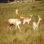 Triple S Wildlife Ranch: 8109 E 1385th Rd, Calvin, OK