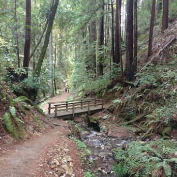 Henry Cowell State Park Hiking on