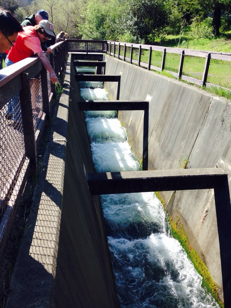Fish ladders u might see them jump up yelp for Lake sonoma fishing report
