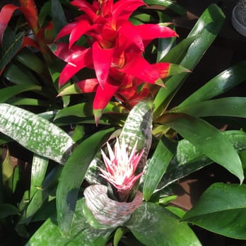 Photo Of Armstrong Garden Centers   Glendale, CA, United States. Bromeliads