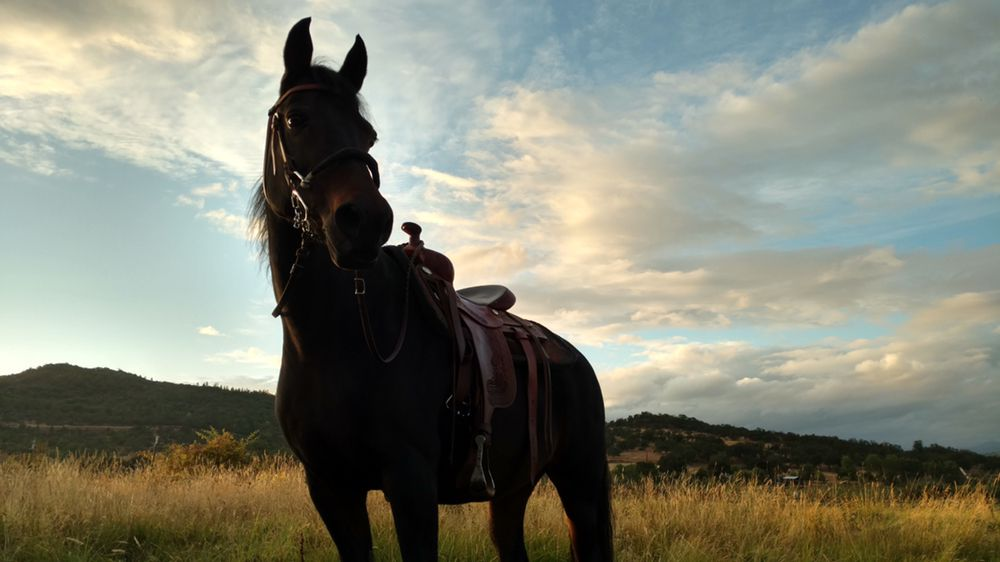 Dry Creek Ranch: 1524 Dry Creek Rd, Eagle Point, OR