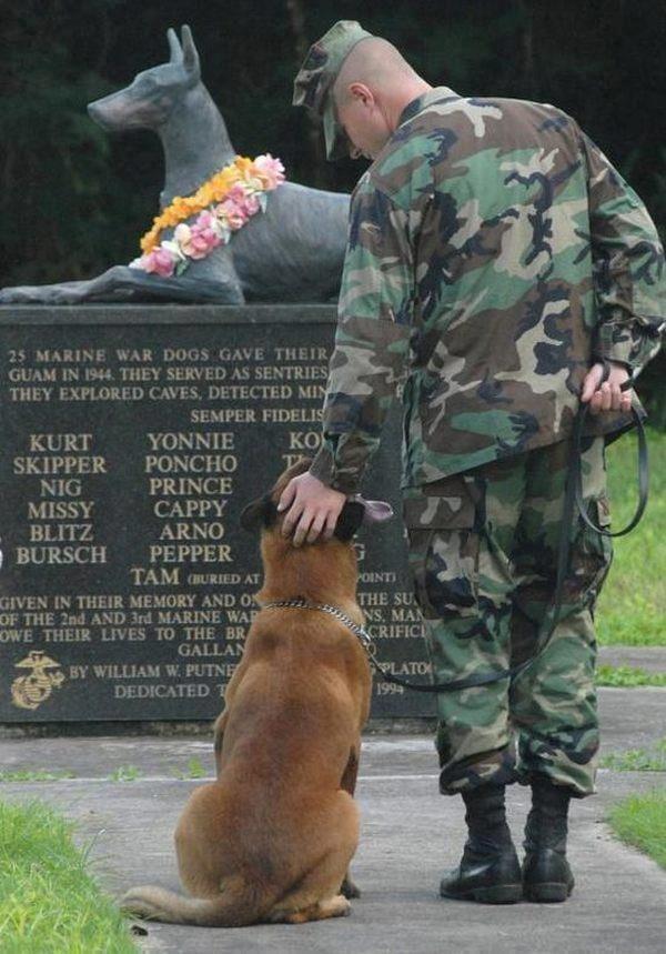 Atlantic Highlands Animal Hospital: 77 Memorial Pkwy, Atlantic Highlands, NJ