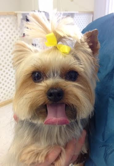 Dog Groomers Virginia Beach: State Of The Art Dog Grooming Spa In Virginia Beach With Whirlpool Tubs, A Sugar Scrub Or Massage & More. Pet Groomers & Pet Grooming Virginia Beach. Pet Hair Cut & Pet Baths, Doggie Daycare, & Spa Facials For Dogs.