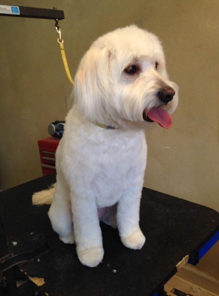 Affordacare Pet Grooming: 6040 50th St N, Saint Paul, MN
