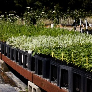 The Watershed Nursery 2019 All You Need To Know Before