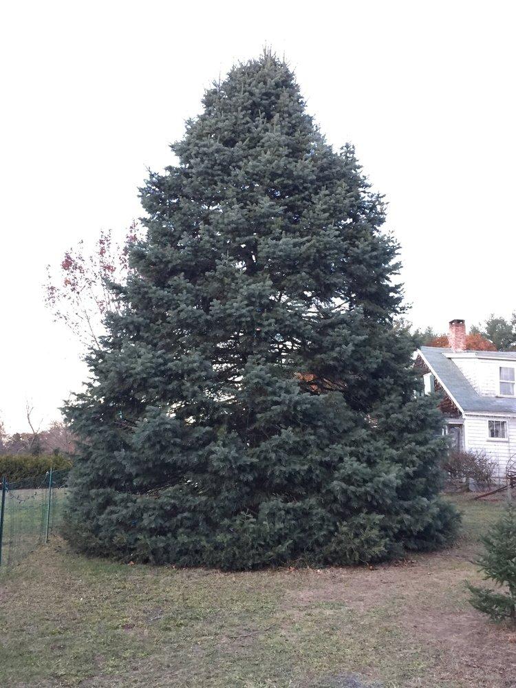 The Christmas Tree Farm: 254 Taylor St, Pembroke, MA