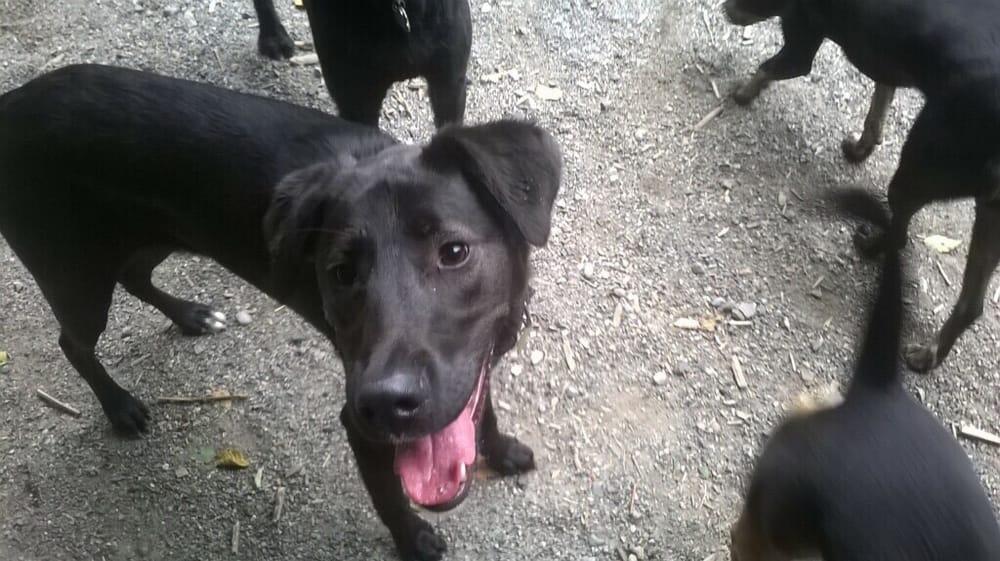 Puppy Love Pet Care: Seattle, WA