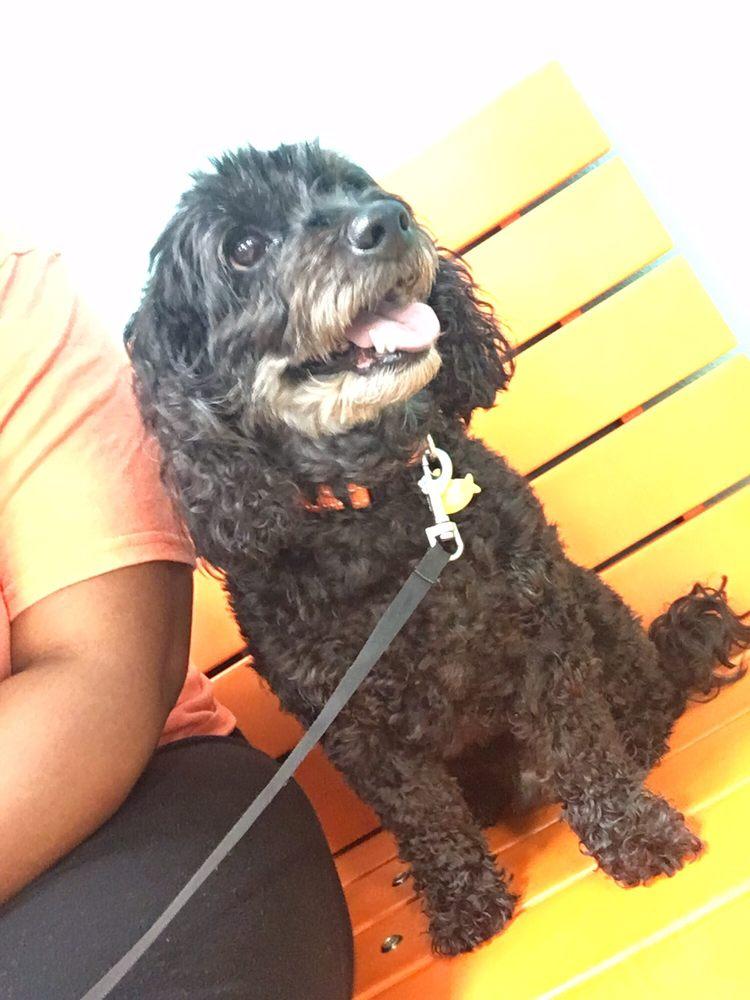 Carolina Poodle Rescue: Pacolet, SC