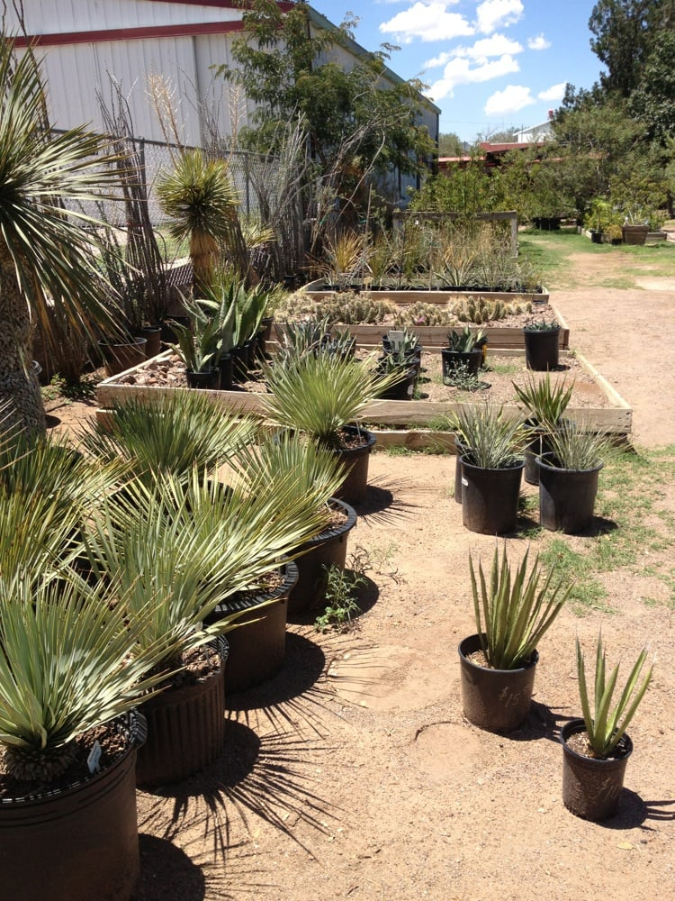 One Way Plant Nursery: 308 W Ave E, Alpine, TX