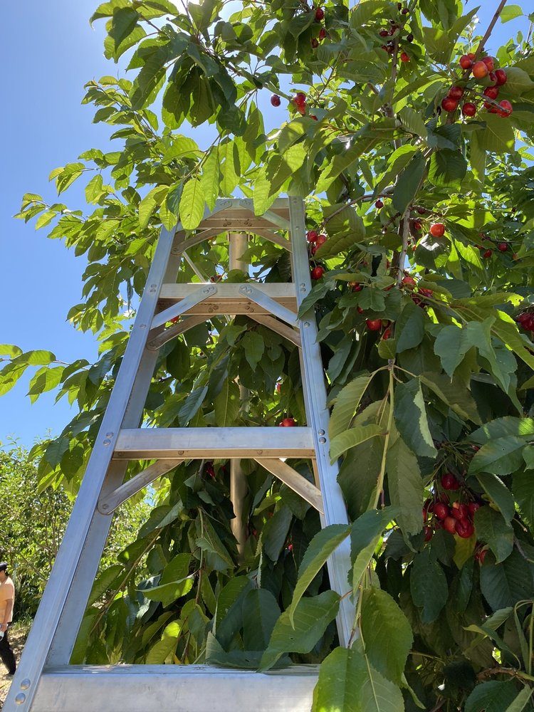Guldseth Cherry Orchard and Vegetable Garden: 9150 Whispering Pines Rd, Cherry Valley, CA