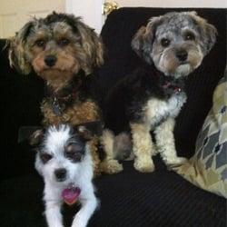 Photo Of ABC Veterinary Clinic