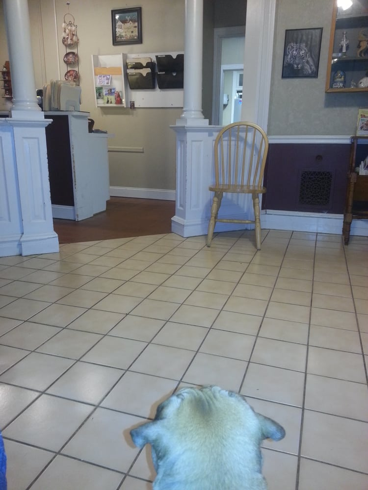 Ambler Veterinary Clinic 17 Reviews Vets 419 N Spring Garden St Ambler Pa United States