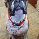 Bath & Doggie Works Pet Salon: 6793 Mcalpine St, Lyons Falls, NY