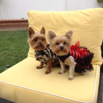Pampered Paws Pet Grooming 25 Photos 11 Reviews Pet Groomers