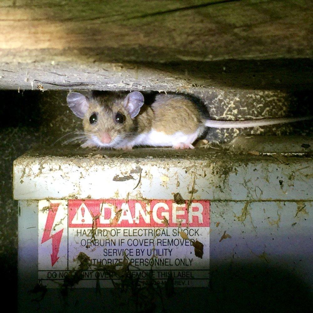 Kent County Pest Control LLC: Coventry, RI