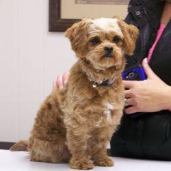 Brookwood Veterinary Clinic - (New) 14 Photos