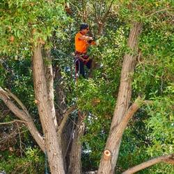Photo Of Sequoia Tree Service Oakland Ca United States