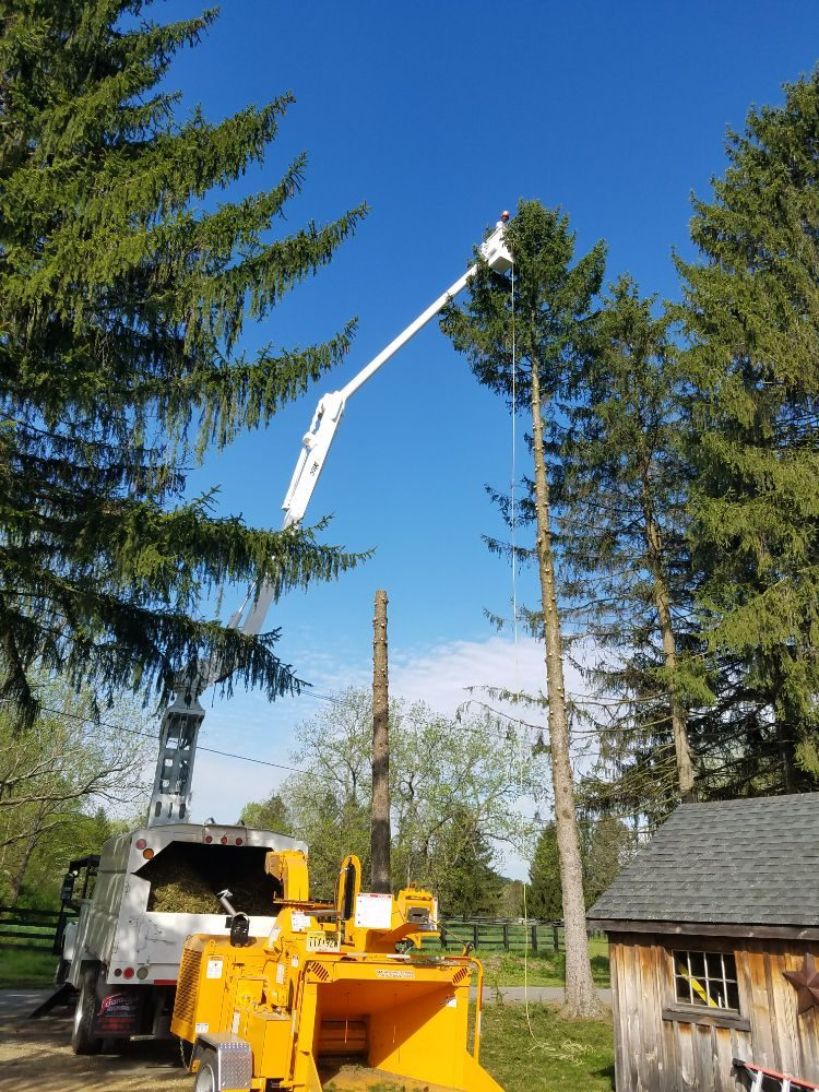 Suyker Tree Care: Oxford Township, NJ