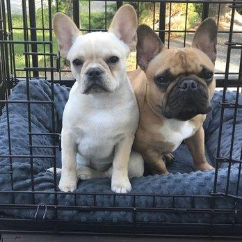 Bay Area Bulldogs 49 Photos 11 Reviews Pet Breeders