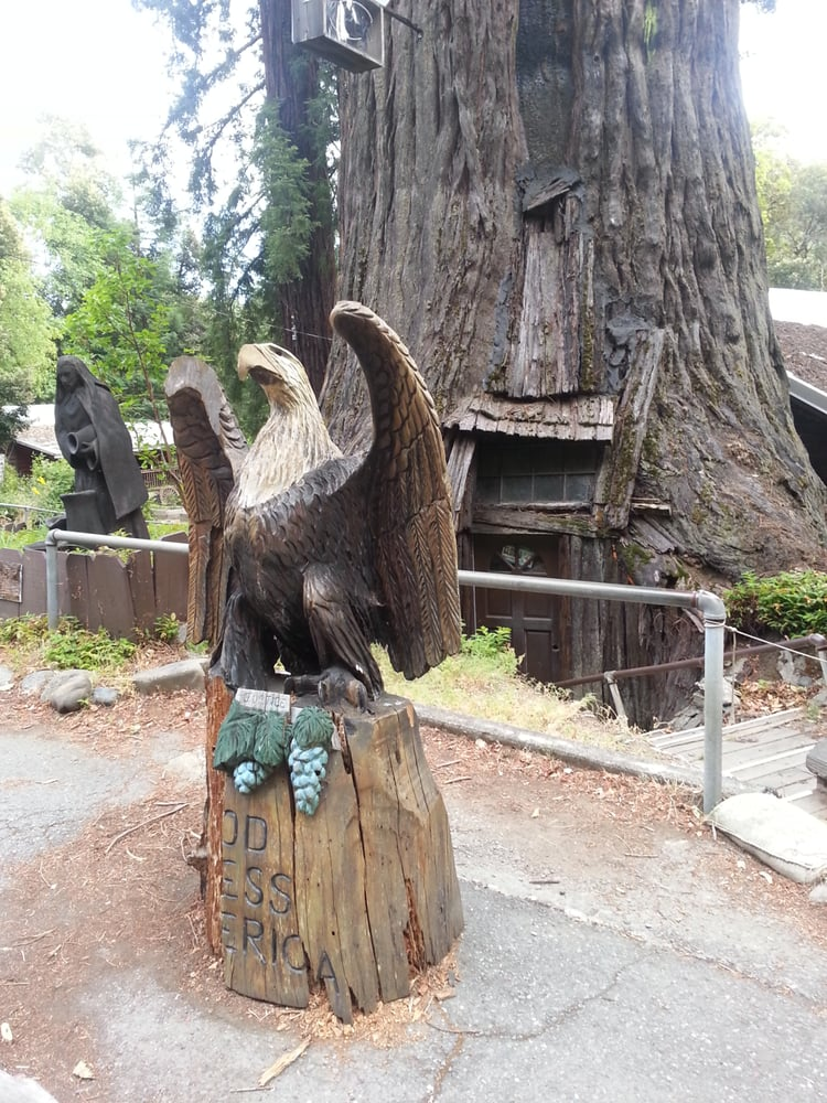 Tree house shopping n highway piercy ca