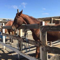 Maloney's Horses and Ponies - 44 Photos & 104 Reviews - Horseback