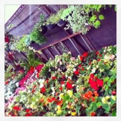 Los viveros de atlixco viveros y jardiner a manuel for Viveros de plantas en atlixco