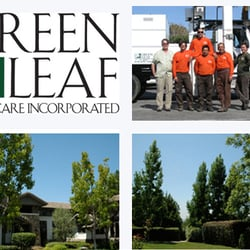 Green Leaf Tree Care Inc