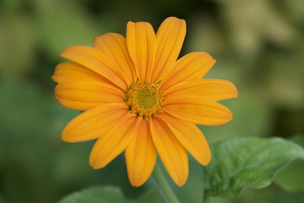 Social Spots from United States Botanic Garden