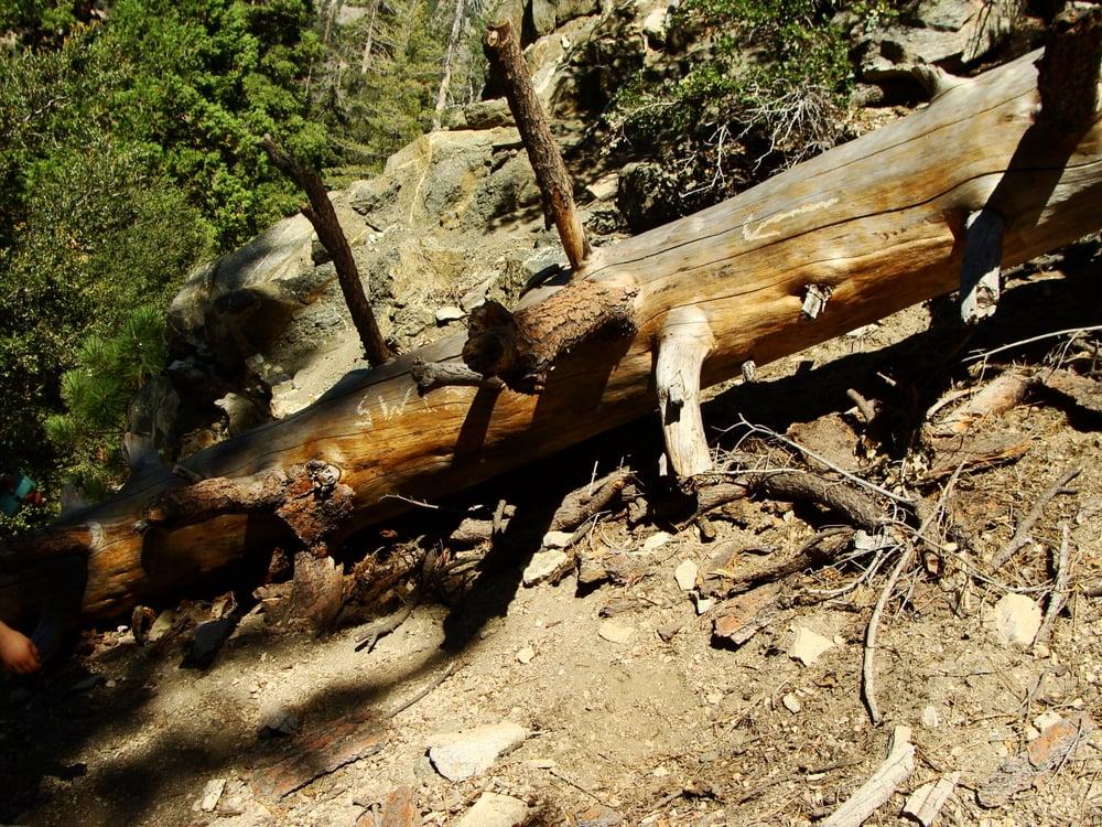 Buckhorn Campground 60 Photos Amp 41 Reviews Campgrounds