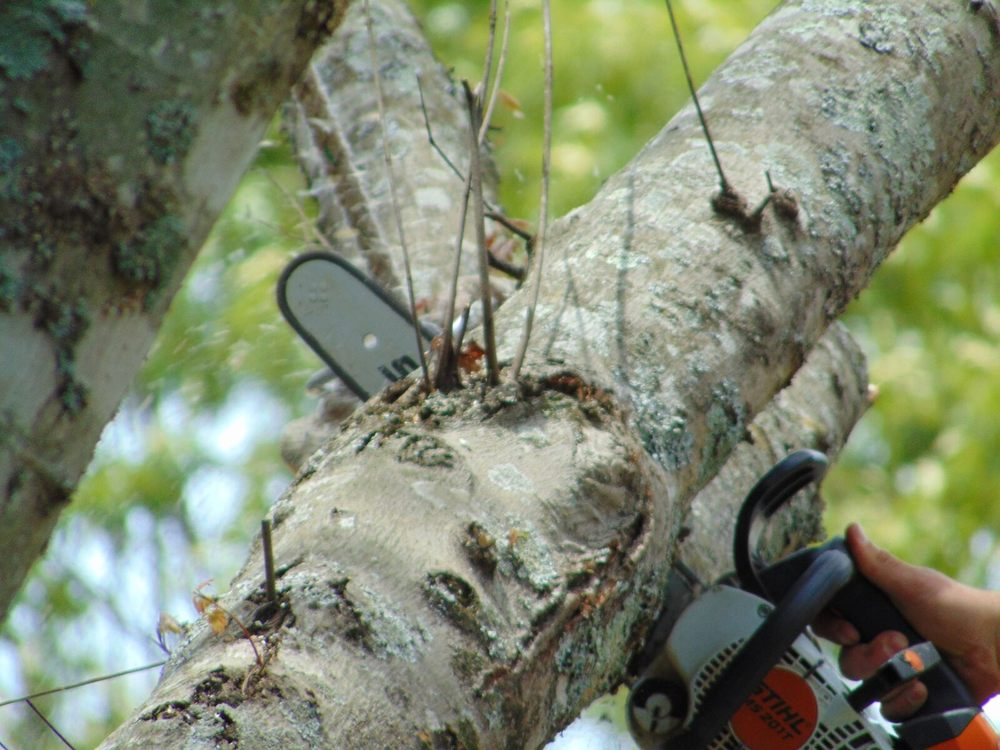 Mullinax Tree Service & More: 821 W Main St, Central, SC