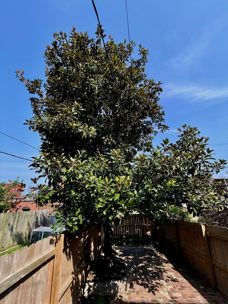 Val's Tree Service: 779 Reed Ave, Saint Louis, MO
