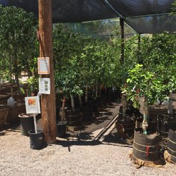 Photo Of Greenfield Citrus Nursery Mesa Az United States