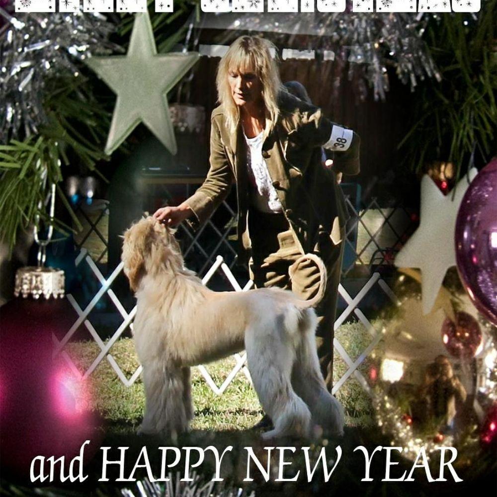 Aleta's Pampered Pooch  Mobile Dog & Horse Grooming: Morriston, FL
